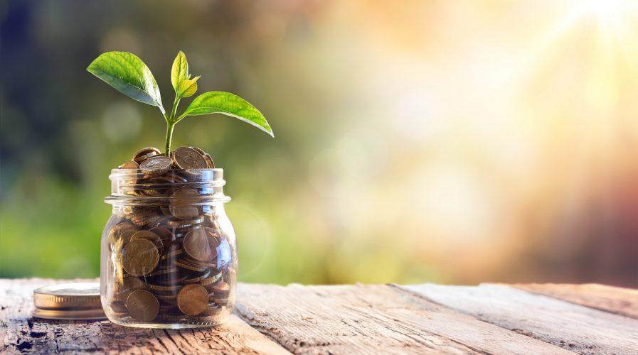 money plant investments