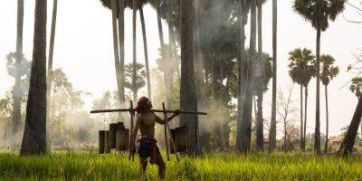 coconut tree plantation worker