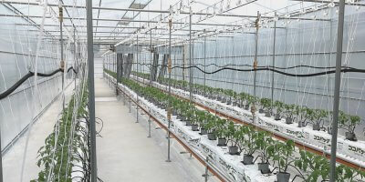 a greenhouse with connected cameras and sensors