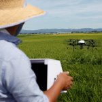 Nileworks Inc.'s automated drone flies over rice plants, spraying pesticide while diagnosing growth of individual rice stalks, during a demonstration in Tome