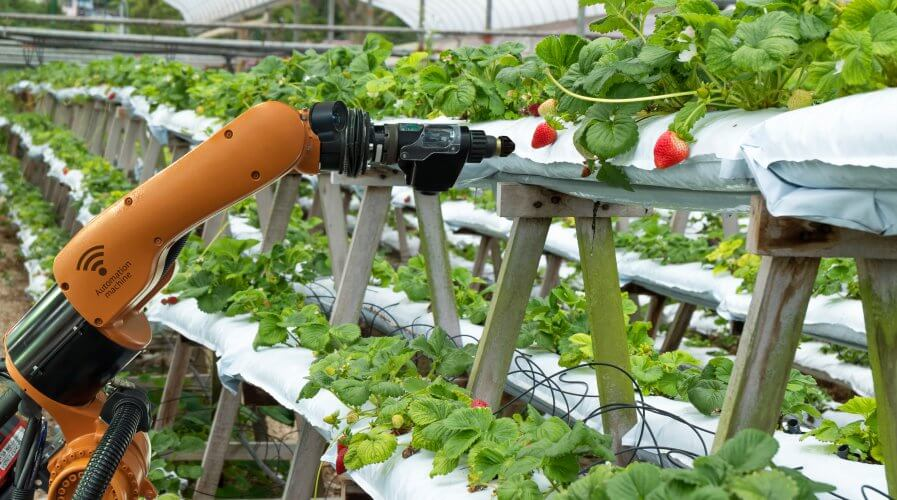 Zealand's farmers can thrive on IoT. Source: Shutterstock