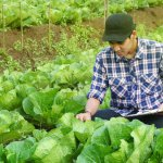 Here's exactly how Olam is using technology to transform its role in the agriculture market. Source: Shutterstock