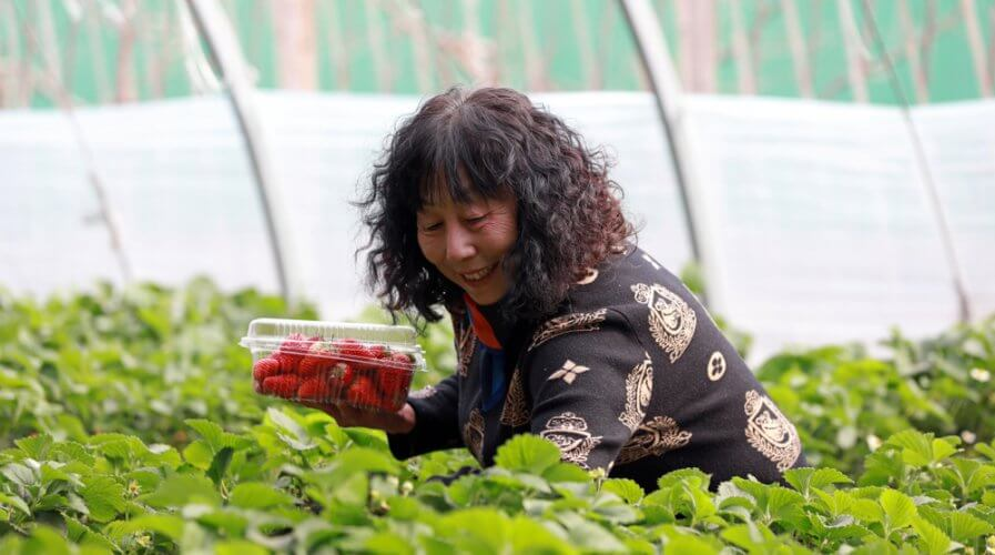 Strawberries can grow better with IoT. Source: Shutterstock