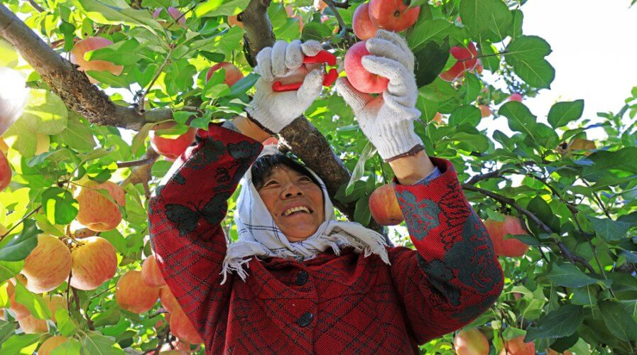 Farmers in China using e-commerce can earn more. Source: Shutterstock