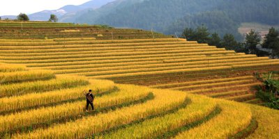Does IoT-powered agritech hold the key to solving unsustainable farming practices in Vietnam?